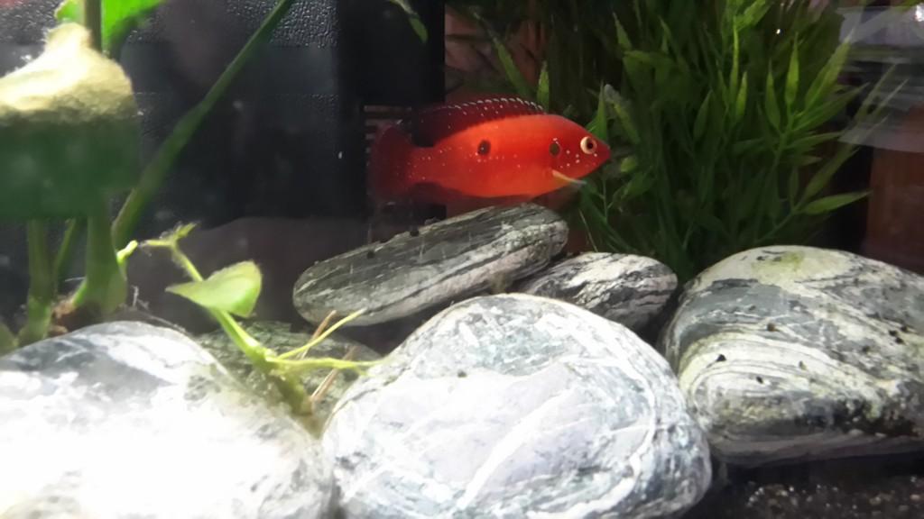 Les nouveaux poissons